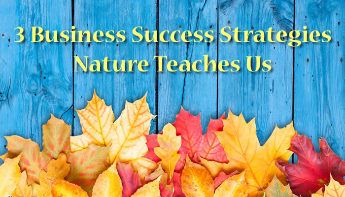 3 Business Success Strategies Nature Teaches Us at the Fall Equinox